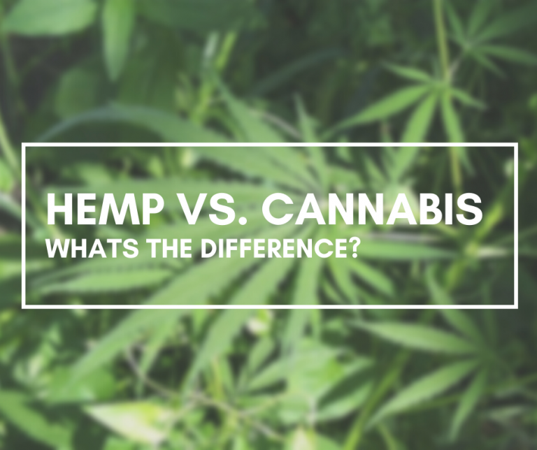 Cannabis and Hemp – The same but different